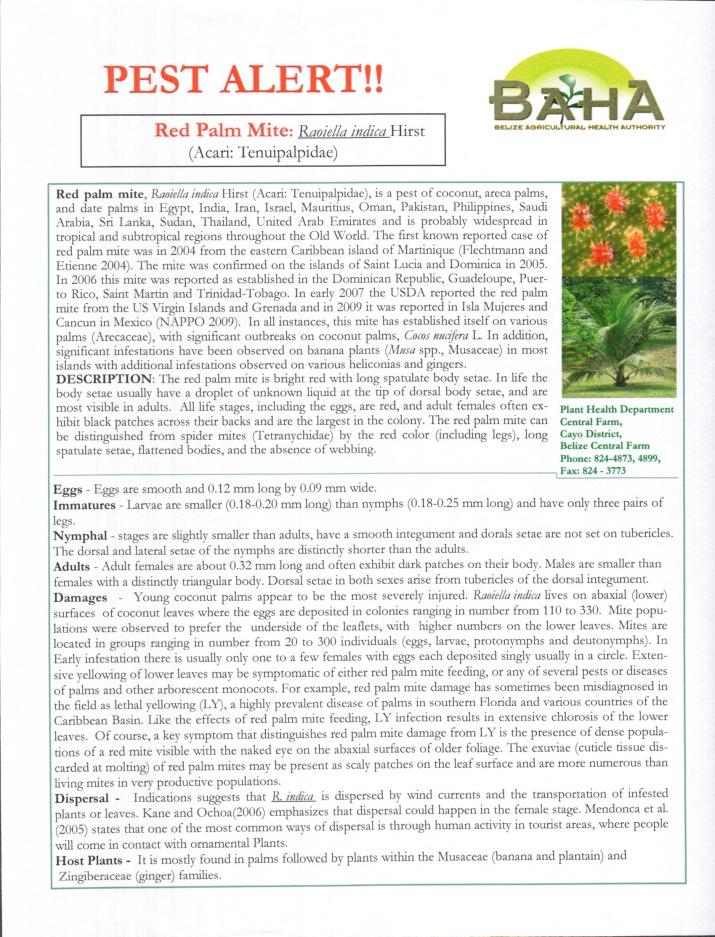Pest Alert Handout: Red Palm Mite